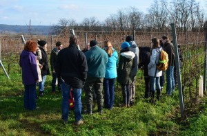 Viennese viticulture students during a grapevine pruning field trip to the famous Langenlois district.