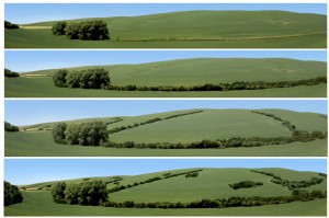 Images show increasing levels of conservation buffers on one of the four Palouse landscape study sites. Residents preferred images with more conservation elements – trees and shrubs that protect the environment and reduce erosion. (Photo courtesy of Linda Klein, WSU)
