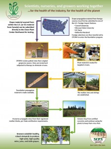 The Clean Plant Center Northwest is part of a national network of foundation vineyards, certified nurseries and growers. (Click image to enlarge.)
