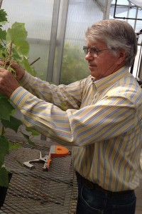 Gary Ballard, operations manager, tending grapevines at the Clean Plant Center Northwest in Prosser.