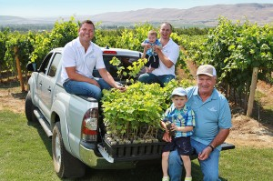 """Inland Desert Nursery, co-owned by brothers Kevin and Jerry and their father, Tom, cultivates 100 acres of clean grapevines known as """"mother blocks"""" with material sourced from Washington State University's Clean Plant Center foundation vineyard. (Photo courtesy of Inland Desert Nursery.)"""