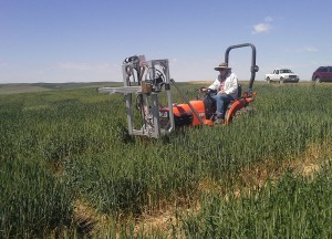 Vic DeMacon, a scientific assistant with the WSU wheat breeding program, uses a multi-spectrum camera to scan for canopy temperature in wheat plants during Pullman field tests last summer. (Photo by Mike Pumphrey, WSU)