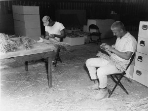 Students examine wheat at the Lind station in 1964. (Photo by Leonard Young/MASC, WSU Libraries)