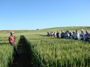 Visitors tour crops at the Spillman Field Day