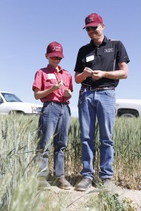 John Jacobsen, technician at Lind station, and his son Jonathan taste peas planted as row markers in a wheat plot.