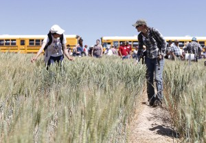 Visitors tour winter wheat rows.