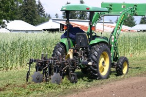 Researchers with WSU's Center for Sustaining Agriculture and Natural Resources planted flail-mowed vetch and broccoli in an organic strip-till trial in Rochester, Wash.