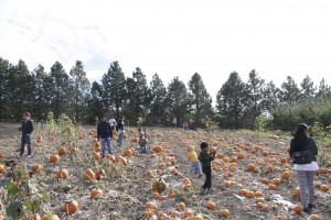 Families explore the pumpkin patch at the 2014 WSU harvest party.
