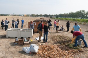 Students work on wine pomace composting project at the Wine Science Center.