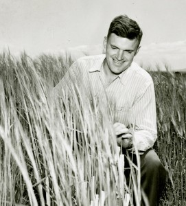 Barley research pioneer Robert A. Nilan inspects a grainfield in 1956. Nilan's work to understand barley genetics and breed new varieties revolutionized Northwest agriculture and enhanced research around the world. (Manuscripts, Archives & Special Collections, WSU Libraries)