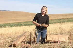 Rachel Wieme inspects harvested quinoa at a research farm near Pullman. Wieme, a doctoral scholar in crop and soil sciences, is learning how to link policy, science and sustainable agriculture this winter through the new C-NSPIRE certificate program.