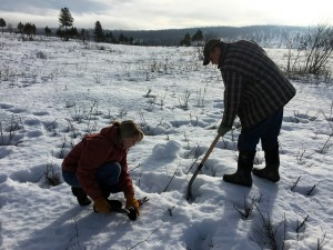 Collecting weed samples in the snow