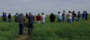 Stakeholders tour a spring canola field in 2015.