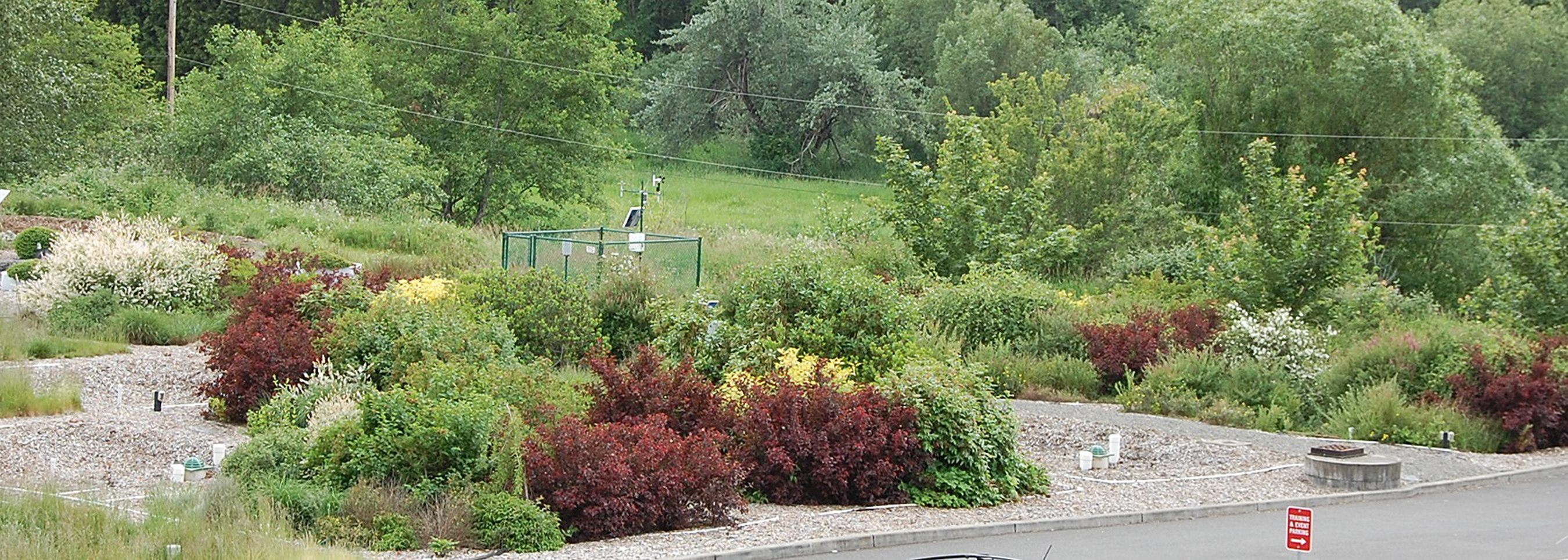 Rain Gardens Brighten Up The Landscape At WSUu0027s Stormwater Center At The  Puyallup Research And Extension