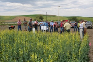 Nearly 60 people attended the WOCS spring canola tour at St. John June 8.  Dennis Roe, WSU and Nate Clemens, Croplan by Winfield, discuss varieties with one group on the tour.