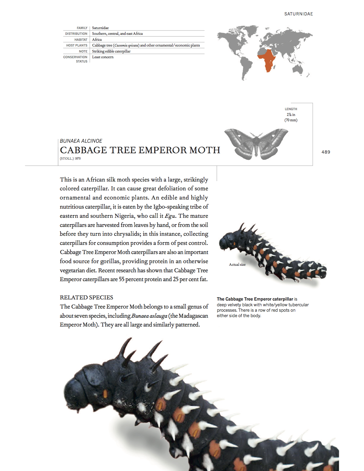 Sample page giving a description of the Cabbage Tree Emperor Moth, with pictures of the caterpillar.