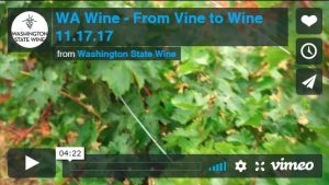 Screen capture of From Vine to Wine vimeo.