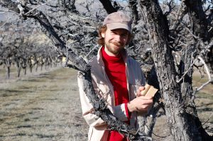 Robert Orpet in an orchard with a cardboard earwig trap