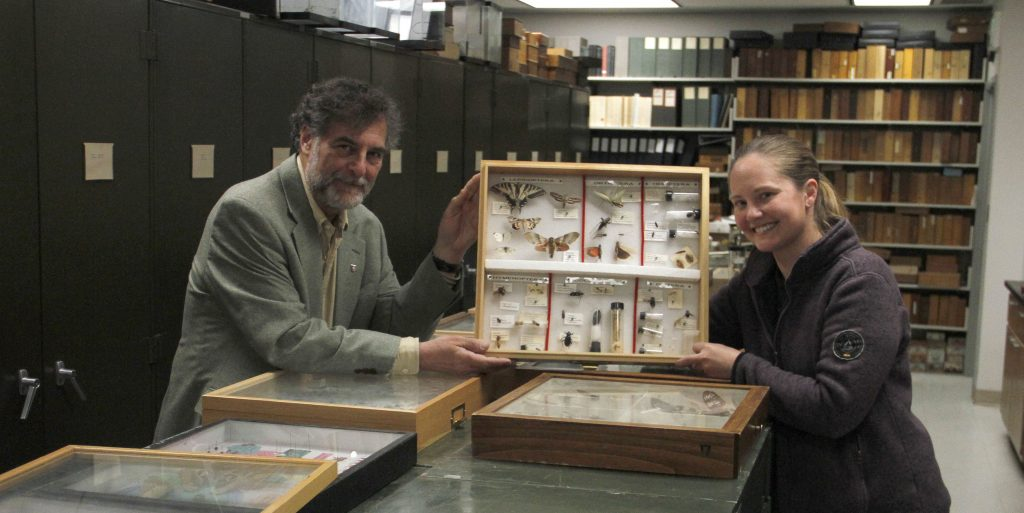Prof. Rich Zack and Doctoral Student Megan Asche display insect specimens at a WSU specimen museum filled with cabinets, cases and vials.