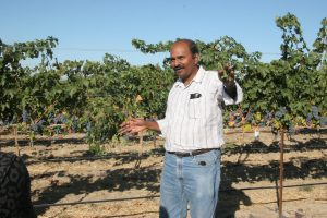 Naidu Rayapati stands in front of grape vines in a vineyard.