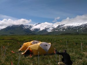 Two yellow tents in a field, surrounded by white posts with orange electrical wires. Huge snow-capped mountains loom in the background.