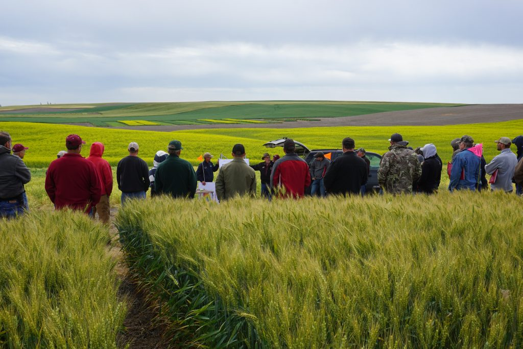 Tour participants take in a demo amid green fields of wheat and other crops at Wilke Farm, with rolling hills in the background.