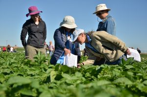 Visitors check out rows of potato crops at the WSU Othello research farm.
