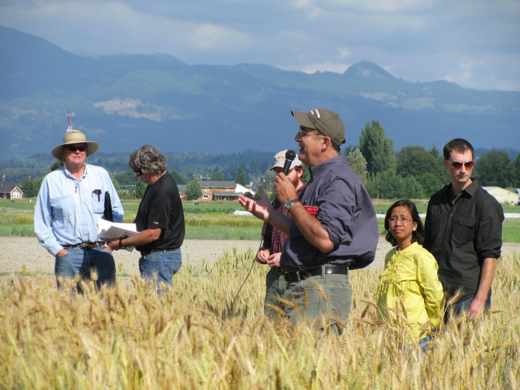 Visitors listen to a speaker with a microphone, touring wheat fields at WSU Mount Vernon.