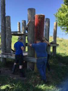 Three people brace a red cylinder on top of a yellow cylinder as they try to chain them against a wooden post.