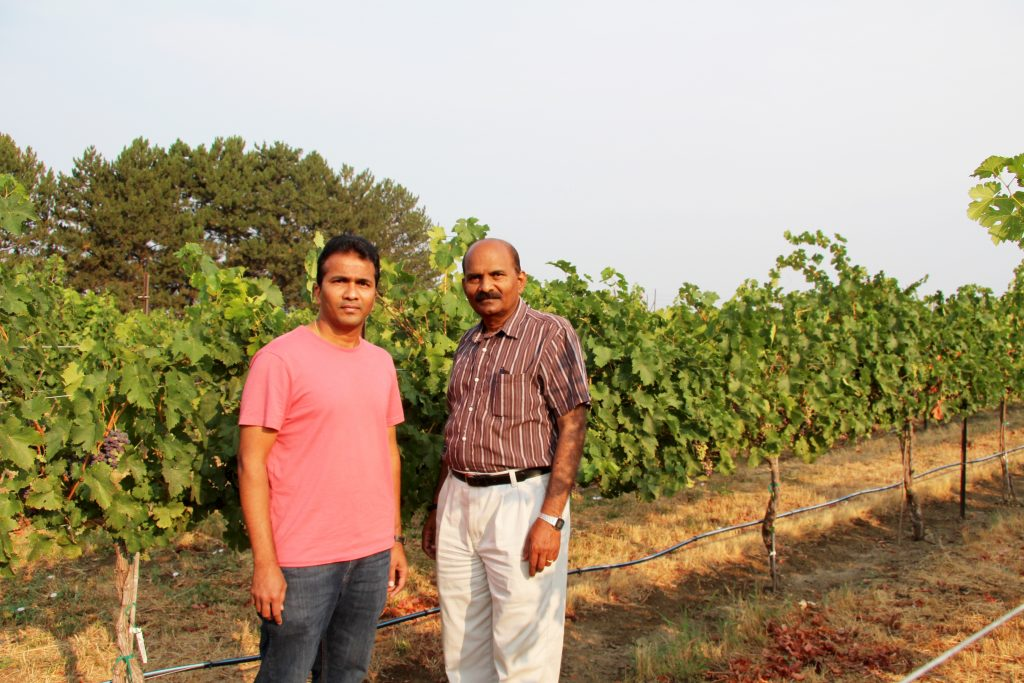 Sridhar and Rayapati, standing in a summer vineyard with healthy vines training into the distance.