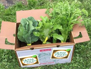 View of leafy greens inside a Farm Fresh Food Box.