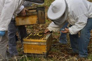 A man in a beekeeper suit leans over and drops a round patty into an open bee colony box.