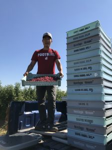 Full-body shot of Zhang, holding a flat box of raspberries, next to a stack of berry boxes.