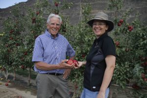 Two WSU researchers visiting a row of apple trees, holding apples.