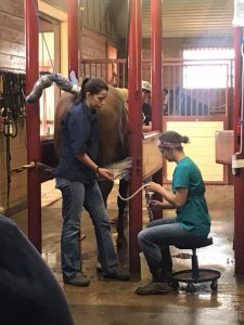 A horse stands in a stall while two women do work around it in a barn.