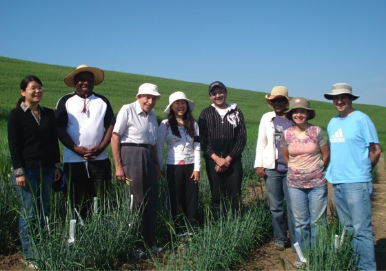 Group of scientists stand in a line in a sunny wheat field.