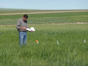 Hulbert stands in a green field holding a clipboard and pen. He's looking at the wheat growing in the field.