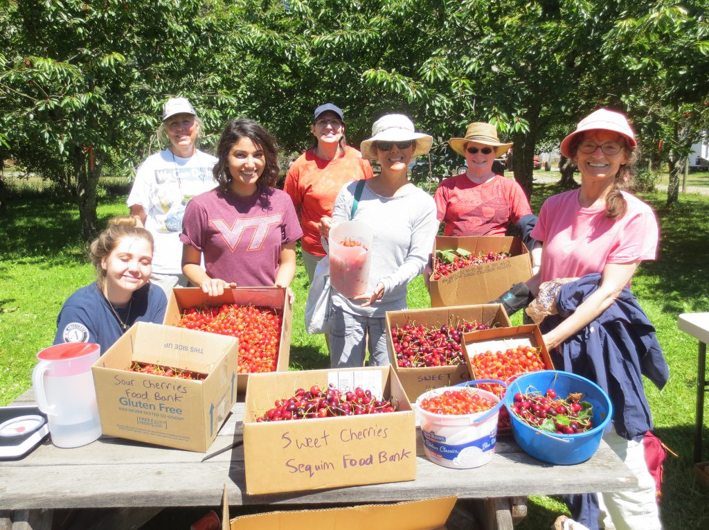 Group photo of gleaners with boxes of cherries on table in orchard.
