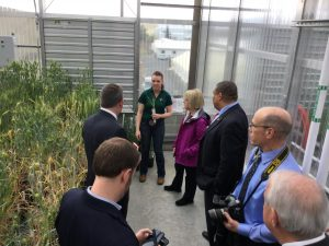 Standing in a greenhouse surrounded by green wheat plants, Strauss holds a wheat plant and talk with several people.