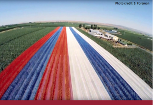Cover aerial image of red, white and blue netting on a fruit orchard.