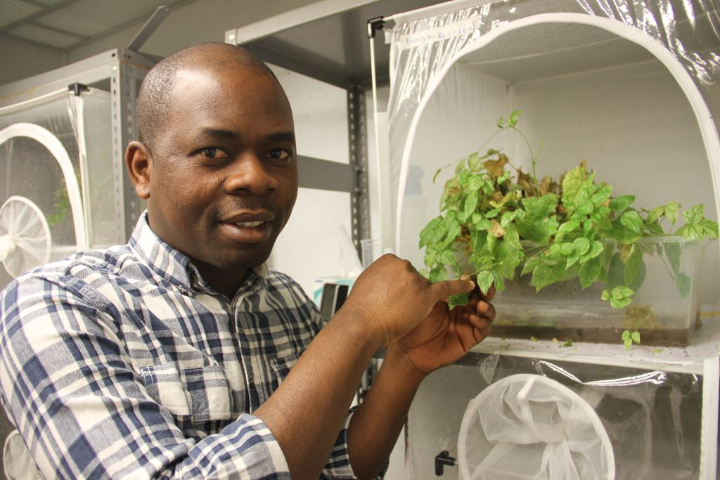 Adekunle points to damaged vines in a plastic container.