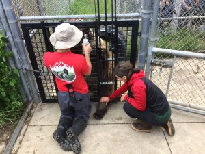 Two people face an fence with a bear on the other side. The male is on his knees holding a plastic bottle in one hand. The woman touches a leg of the bear, which is sticking out of a hole in the fence.