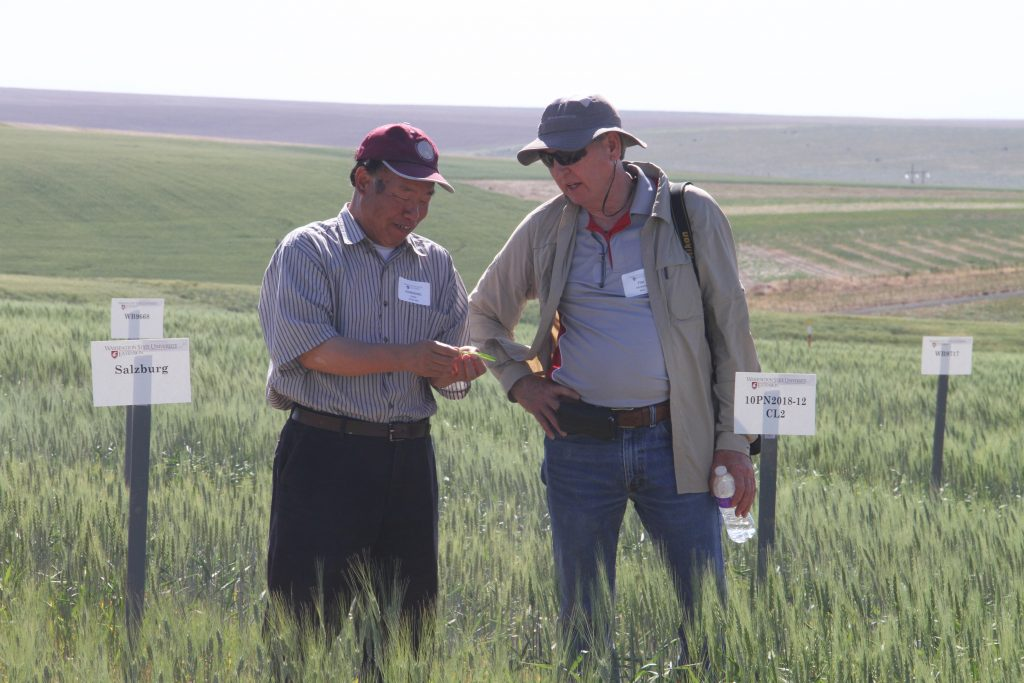 Chen, standing, holding wheat plant as Murray stands and looks on.