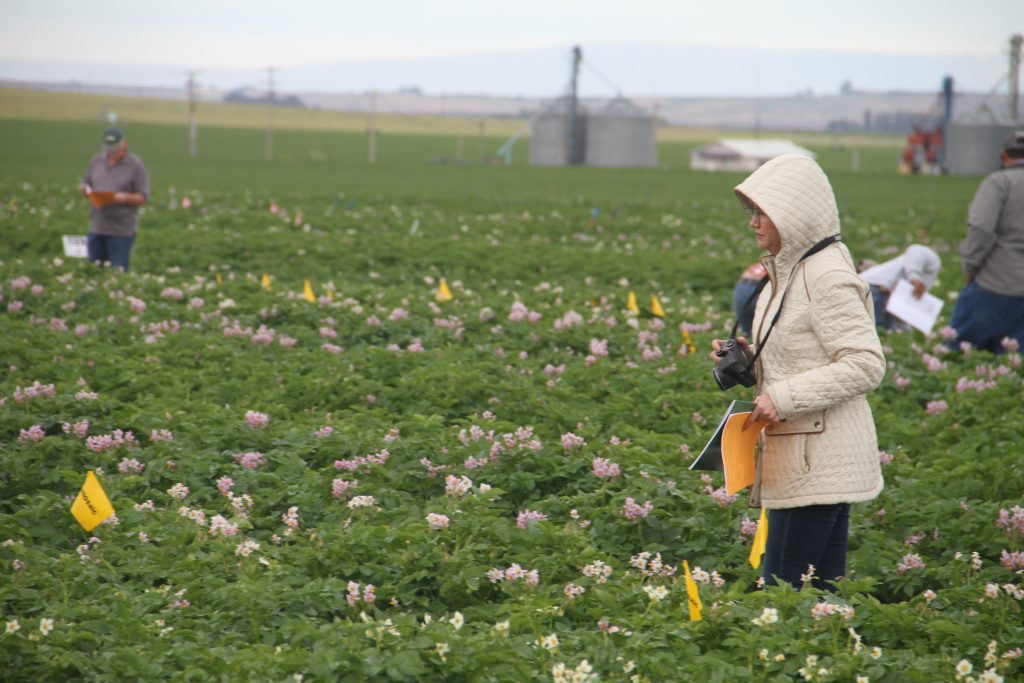 People with cameras and sheets of paper walking through a field of potato plots.