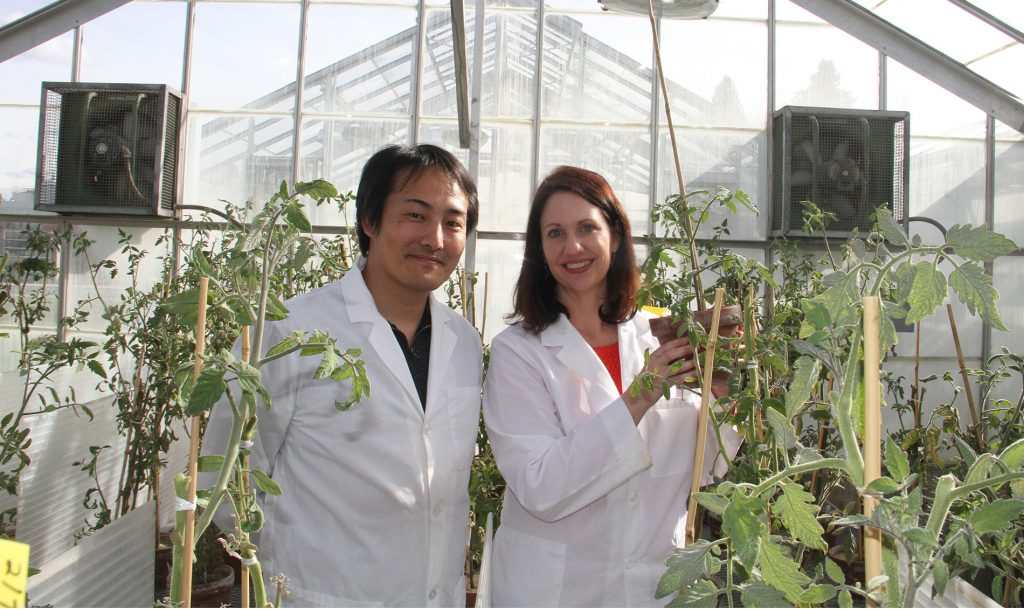 Tanaka and Gleason in the greenhouse, with Gleason holding a potato plant.