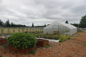 Greenhouse, garden, SNAP-Ed, Island County, Crescent View Elementary