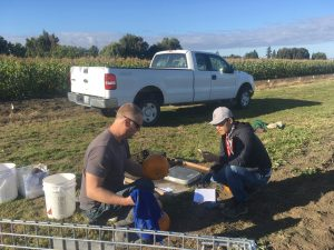 Two researchers work with pumpkins near a farm field.