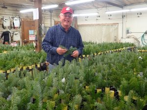 Chastagner stands in front of a table covered in fir tree branches, which are standing vertical in pots.