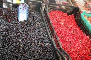 Blueberries and cranberries in market bins. A metal scoop in the blueberry bin.