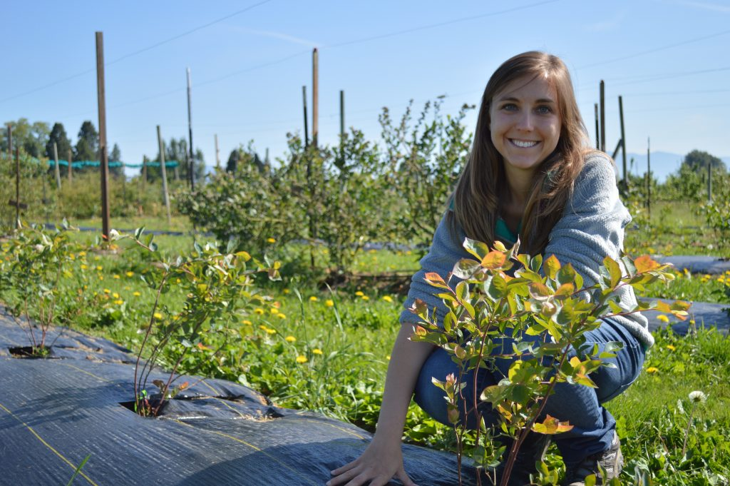 DeVetter, crouching and holding blueberry plants at a field of berry plants.